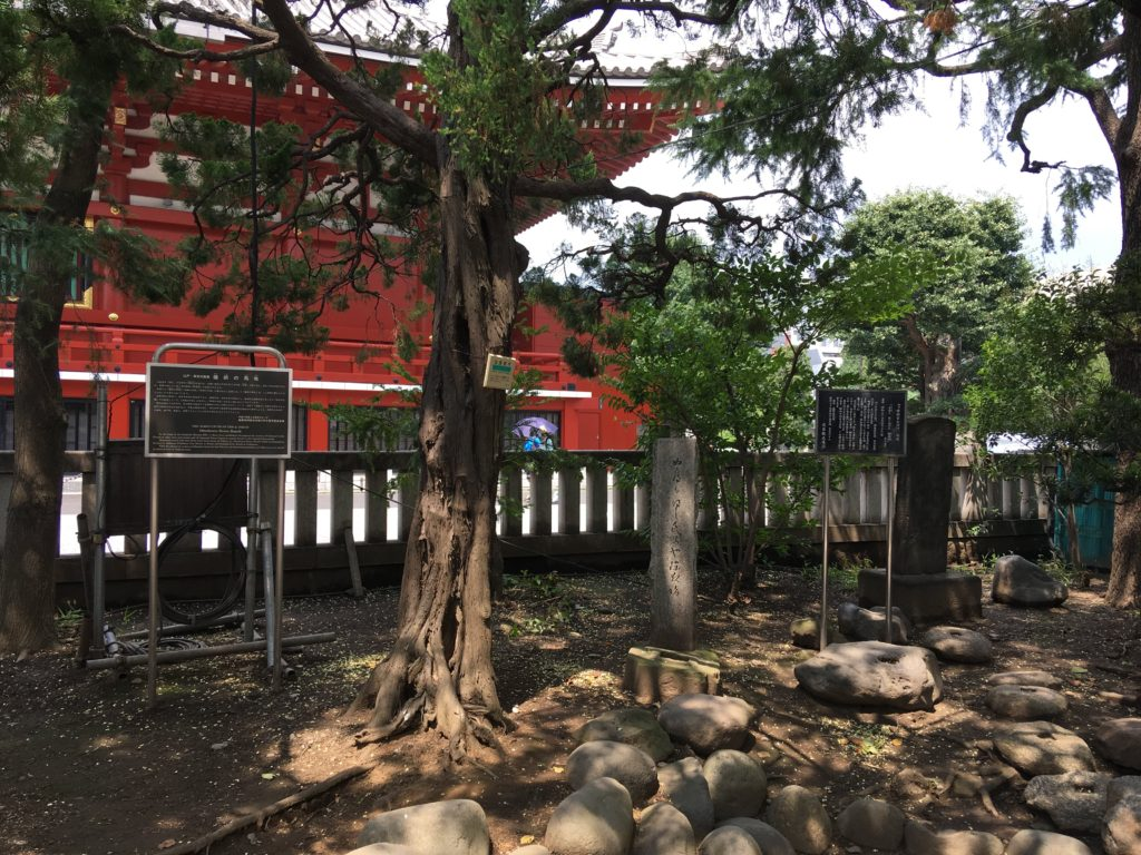 浅草神社神木